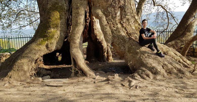 Картинки по запросу старое дерево в арцахе